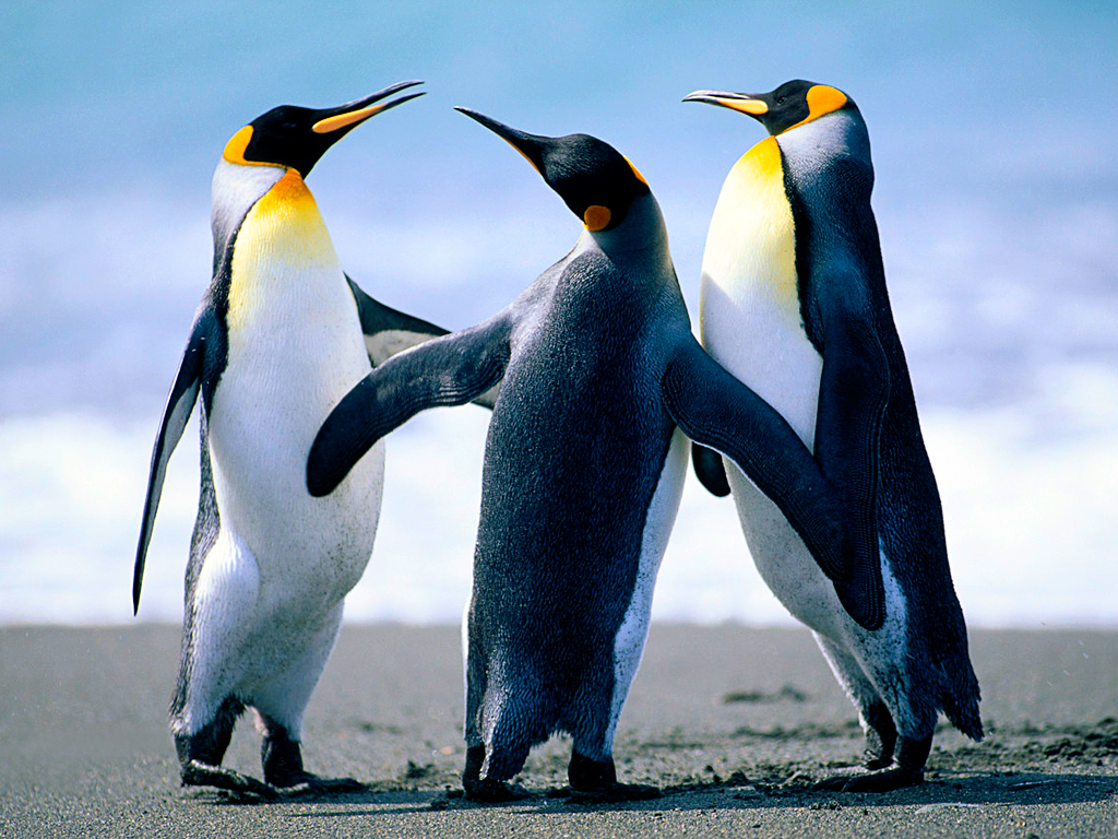 Aesthetic Realism Teaching Method views the Emperor Penguin